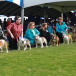 2016 Kennel Club of Palm Springs PCBC Supported Entry